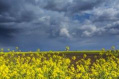 Canolafeld im ländlichen Gebiet Stockfotos