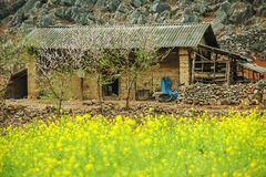 Canolafeld nahe Haus von ethnischen Minderheiten Lizenzfreies Stockfoto