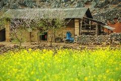 Canolafeld nahe Haus von ethnischen Minderheiten Stockfotografie
