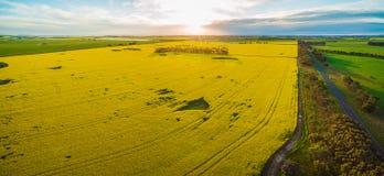 Canolafeld und Ackerland bei Sonnenuntergang in Victoria, Australien - Luftpanorama Lizenzfreie Stockfotos