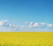 Canolaskördar på blå himmel Arkivfoton