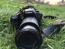 Canon 7D digital camera 18-135 lense. With black and yellow lizard in the nature stock photo