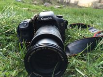 Canon 7D digital camera 18-135 lense. With black and yellow lizard in the nature stock photography