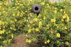 Canon i mitt av blommor Arkivfoton