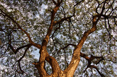 Canopy Stock Photography