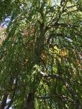 canopy Royaltyfria Foton