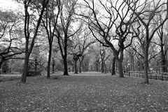 Canopy of American elms in Central Park Royalty Free Stock Photography