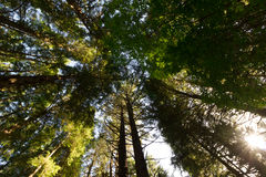 Canopy from Below Royalty Free Stock Photography