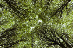 Canopy of branches Royalty Free Stock Image