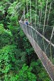 Canopy bridge Stock Photos