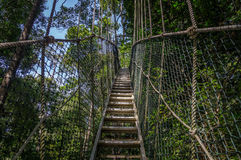 Canopy bridge in Taman Negara, Malaysia. Canopy bridge in Taman Negara national park, Malaysia Stock Photos