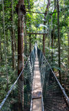 Canopy bridge walk Stock Image