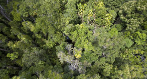 Canopy of Daintree Rainforest. Top down view of the canopy of Daintree Rainforest in Cairns, Australia Royalty Free Stock Photos