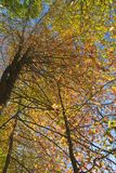Canopy of fall colors. A view of hardwood trees in their fall colors in the canopy stock photo