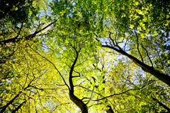canopy forest green Στοκ φωτογραφία με δικαίωμα ελεύθερης χρήσης