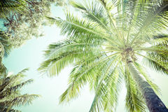 Canopy and fronds of a palm tree Stock Photo