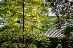 Canopy of green before ancient Chinese building on sunny day. Chengdu,China Royalty Free Stock Image