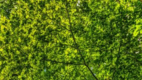 Canopy, Green, Leaves, Branches Stock Photos