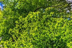 Canopy, Green, Leaves, Branches Stock Image