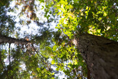 Canopy of green Royalty Free Stock Photo