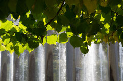 Canopy of Leaves with Fountains in the Background Stock Image