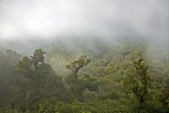 Canopy of rain forest. This is the endangered canopy of an original central american rain forest with very complex vegetation Stock Images