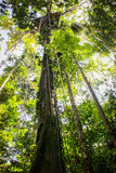 Canopy ropes at amazon jungle Royalty Free Stock Images
