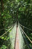Canopy sky walk in rain forest Stock Image
