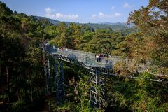 Canopy Skywalk. CHIANGMAI, THAILAND - 20 December 2015 :Canopy walkway ,Thailand at the Queen Sirikit Botanical Garden Royalty Free Stock Image