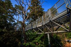 Canopy Skywalk. CHIANGMAI, THAILAND - 20 December 2015 :Canopy walkway ,Thailand at the Queen Sirikit Botanical Garden Royalty Free Stock Images