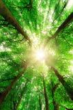 Canopy sunburst Royalty Free Stock Images