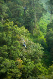 Canopy Tour. Woman on a zip line in panama canopy Royalty Free Stock Photo