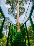 Canopy Trail in Bukit Lawang Orangutan Viewing Centre. With view of Big Tree. The canopy trail is new attraction, located in Bukit Lawang, Indonesia Stock Photo