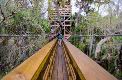 Canopy Trail, Florida Stock Image
