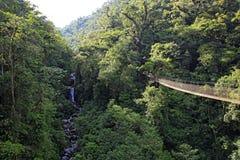 Canopy Tree Trek Stock Photography