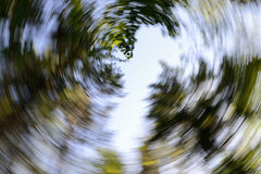 Canopy of Trees - Abstract Spiral Effect Background. Looking up through a canopy of trees taken using a long exposure with a turning motion to create a spiral stock photo