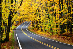 Canopy of Trees. Along US-41 near Copper Harbor, Michigan stock photos