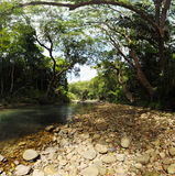 Canopy of trees covering a stream in a jungle Royalty Free Stock Photography