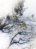 Canopy royalty free stock image