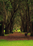 Canopy of trees Stock Image