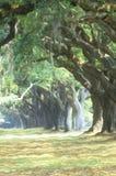 Canopy of Trees, Plantation Road Royalty Free Stock Photos