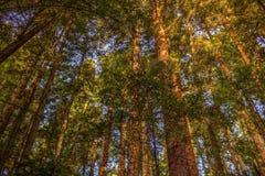 Canopy Stock Image