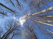 Canopy view Stock Photo