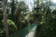 Canopy walk. The canopy walk in danum valley in malaysian borneo royalty free stock images