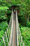Canopy Walk. A nature tropical jungle canopy walk in Jurong bird park, Singapore Stock Images