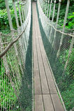 Canopy Walk Stock Photo