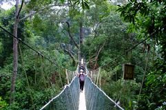 Canopy walk Royalty Free Stock Photos