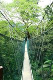 Canopy Walk. For about 200 Meters, In FRIM, Kepong Malaysia. Frim is a forest research centre in malaysia stock images