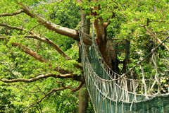Canopy Walk. For about 200 meters, In FRIM, Kepong Malaysia. Frim is a forest research centre in malaysia stock photos