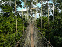 Canopy Walk Ghana. Rope walkway through the treetops in a rain forest in Ghana Stock Photography